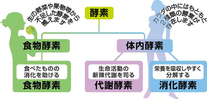 酵素の種類